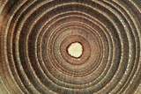 Growth Rings of a Tree Prints by Georgette Douwma