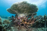 Artificial Reef Photographic Print by Georgette Douwma