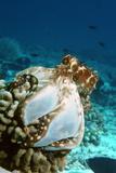 Octopus Hunting Fotoprint van Georgette Douwma