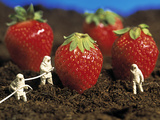 Concept of Genetically Engineered Strawberries Posters by Mauro Fermariello