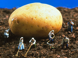 Conceptual Image of Genetically Engineered Potato Premium Photographic Print by Mauro Fermariello