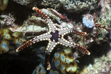 Elegant Seastar on a Reef Photographic Print by Georgette Douwma