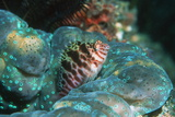 Two-spotted Hawkfish Posters by Georgette Douwma