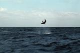Mako Shark on a Fishing Line Reproduction photographique par Georgette Douwma