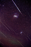Leonid Meteors Photographic Print by Dr. Fred Espenak
