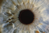 Human Eye Photographic Print by Martin Dohrn