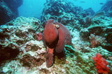Day Octopus Photo by Georgette Douwma
