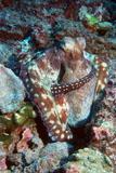 Day Octopus Prints by Georgette Douwma
