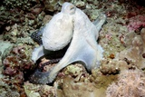 Day Octopus Fotoprint van Georgette Douwma