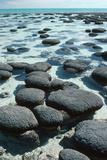 Stromatolites Reproduction photographique par Georgette Douwma