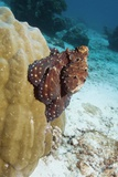 Day Octopus Photographic Print by Georgette Douwma
