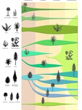 Plant Evolution, Diagram Photographic Print by Gary Gastrolab