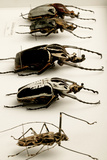 Beetle Collection Photo by Mauro Fermariello