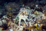 Day Octopus Hunting on a Reef Prints by Georgette Douwma