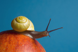 Snail Photographic Print by Georgette Douwma