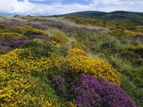 Mixed Wildflowers on Moorland Photographic Print by Bob Gibbons