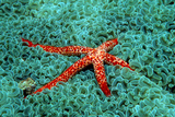 Comet Sea Star Photographic Print by Georgette Douwma