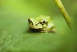 Tree Frog Prints by Georgette Douwma
