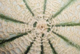 Melon Skin Photographic Print by Angel Fitor