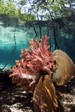 Corals In a Mangrove Swamp Photographic Print by Georgette Douwma