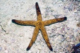 Luzon Starfish Prints by Georgette Douwma