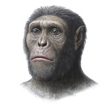 Australopithecus Sediba Head Photographic Print by Mauricio Anton