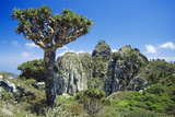 Dragon's Blood Tree Photographic Print by Diccon Alexander