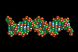 DNA Molecule Photographic Print by Dr. Tim Evans