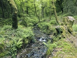 Stream And Woodland In Devon Photo by Adrian Bicker