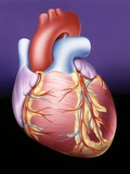 Heart, Artwork Premium Photographic Print by John Bavosi