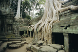 Roots of a Kapok Tree Photographic Print by Diccon Alexander