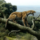 Promegantereon Sabre-tooth Cat, Artwork Photographic Print by Mauricio Anton