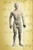 Chinese Acupuncture Model Prints by Doncaster and Bassetlaw