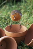 European Robin on a Flowerpot Photo by David Aubrey