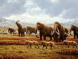 Woolly Mammoths Photographic Print by Mauricio Anton