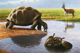 Giant Tortoise Prints by Mauricio Anton