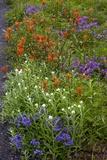 Roadside Flowers, Cascade Mountains, USA Photo by Bob Gibbons