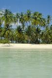 Tropical Beach Print by Diccon Alexander