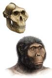 Australopithecus Boisei Photographic Print by Mauricio Anton