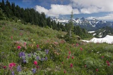 Mountain Meadow Photographic Print by Bob Gibbons