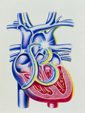 Heart Disease: Art of Heart & Beta Blocker Symbol Photographic Print by John Bavosi