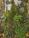 Epiphytic Plants Print by Bob Gibbons