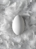 Egg on Feathers, Conceptual Image Premium Photographic Print by Biddle Biddle