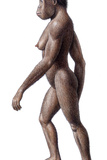 Female Australopithecus Africanus Posters by Mauricio Anton