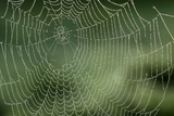 Spider Web Print by Adrian Bicker