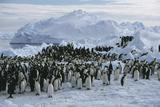 Emperor Penguins Fotografisk tryk af Doug Allan