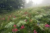 Mountain Meadow In the Mist Photographic Print by Bob Gibbons
