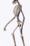 Australopithecus Africanus Skeleton Prints by Mauricio Anton