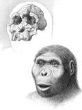 Kenyanthropus Platyops Photographic Print by Mauricio Anton