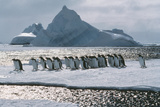 Gentoo Penguins Photographic Print by Doug Allan